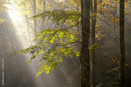 bosco del cansiglio 425 © peggy