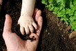 canvas print picture - father and daughter hands play with soil in the garden