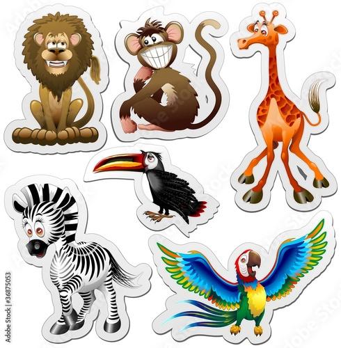 papuga-zyrafa-lew-zebra-tukan-malpa