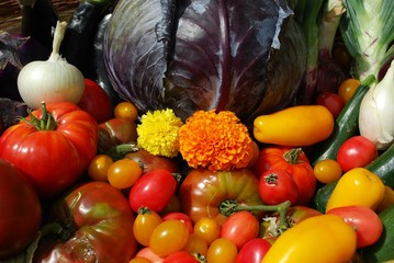 Selection of fresh colorful summer vegetables as a background