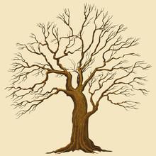 Big Tree Vector Illustration