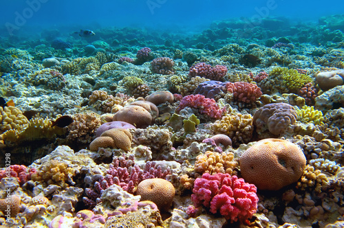 Poster Sous-marin Coral reef, Red Sea, Egypt