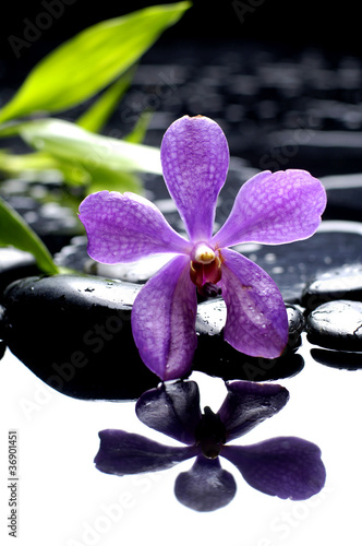 Poster Spa bright orchid and black stone with green leaf reflection