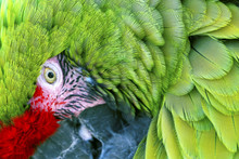 Green Red Feathers Military Ma...