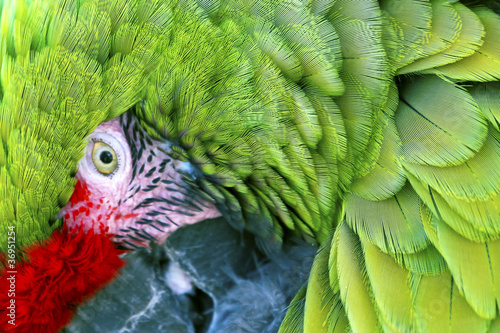Photo Green Red Feathers Military Macaw Close Up
