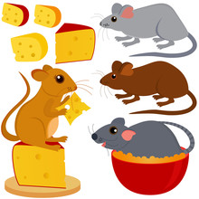 Cute Vector Collection Of Rat ...