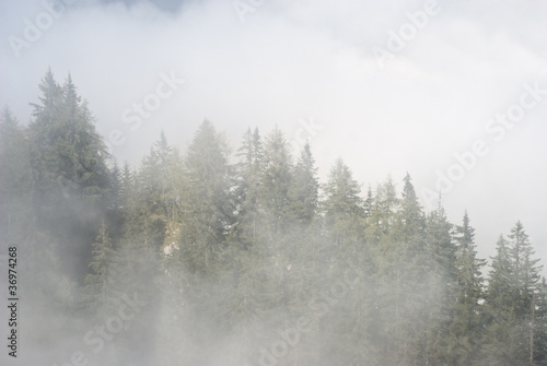 Garden Poster Forest Fog in the Mountains