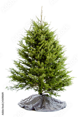 Fotografija  Undecorated Christmas tree isolated on white
