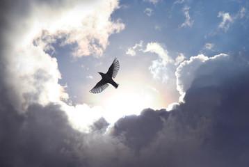 FototapetaAngel Bird in Heaven