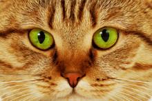 Close-up Portrait Of Green-eye...