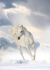Panel Szklany Do pokoju dziewczyny white horse