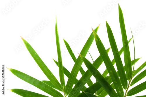 Papiers peints Bambou feuilles bambou