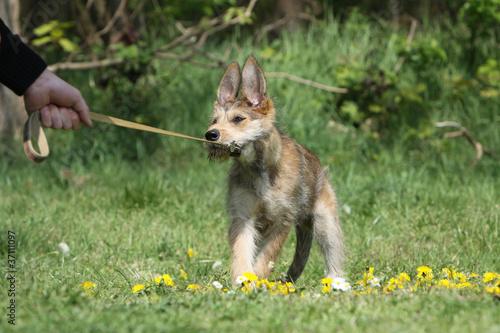 Fotografía  maitre qui tire la laisse de son chien