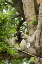 White Gibbon, Khao Kheow Open ...