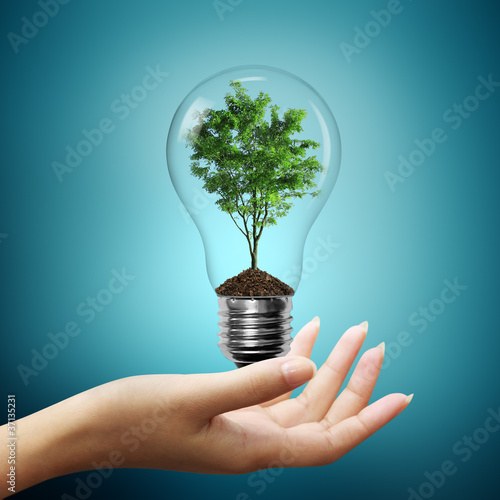 Foto op Canvas Natuur Bulb light with tree inside on woman hand