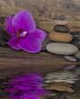 Orchidee und Wasser