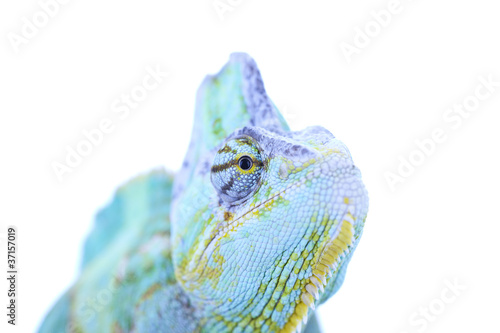 Staande foto Kameleon Head of chameleon