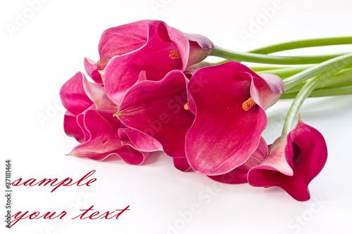 Fotografie, Obraz  Red Flower Calla