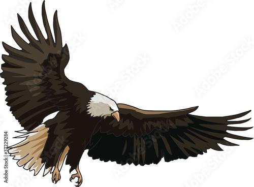 Photo  Landing of eagle