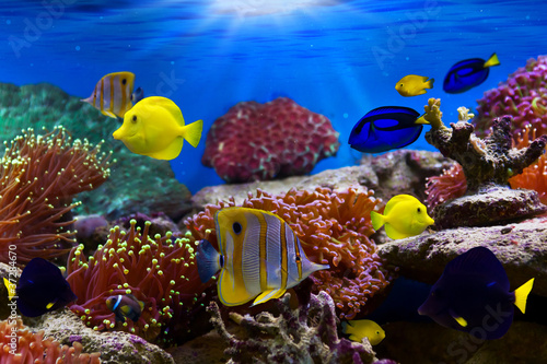 Fotobehang Onder water Coral Reef and Tropical Fish in Sunlight