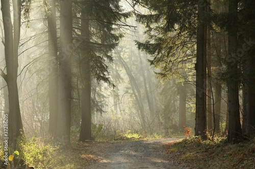 Papiers peints Foret brouillard Trail in the coniferous forest on a foggy November morning
