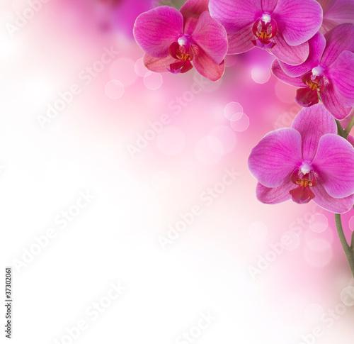 projekt-granicy-kwiat-orchidei