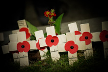 Wartime Remembrance Poppies Illuminated By Flashlight