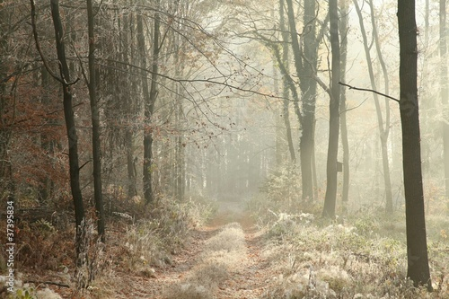 Papiers peints Foret brouillard Forest trail among the plants covered with frost