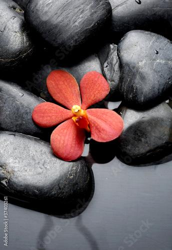 piekne-czerwone-storczyki-z-kamieniami-do-terapii