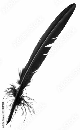 plume noire Fototapeta