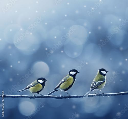 Photo  three titmouse birds in winter