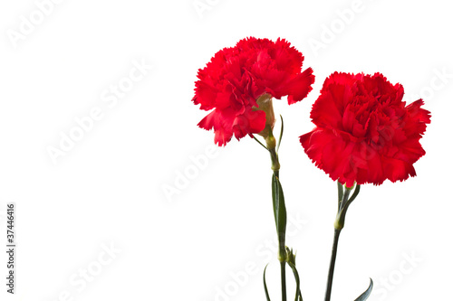 Photo red carnation