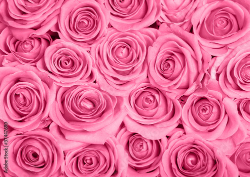 Tuinposter Roses Pink roses