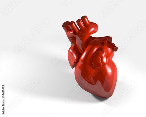 Modell eines menschlichen Herzens – kaufen Sie diese Illustration ...