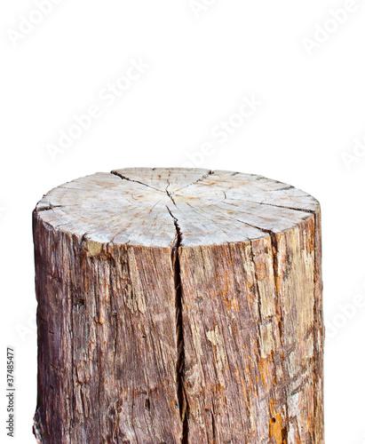 old wood stump