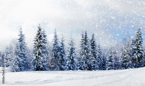 Poster Blanc Beautiful winter landscape with snow covered trees