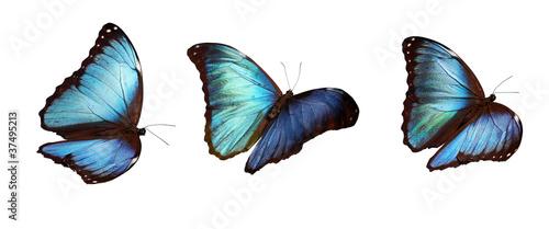 Tablou Canvas 3 blue morphos