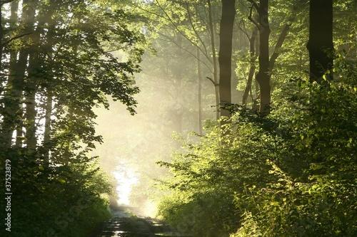 Foto auf Acrylglas Wald im Nebel Foggy spring morning in the leafy woods