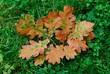 canvas print picture - Eichenlaub im Herbst