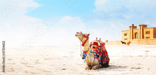 Keuken foto achterwand Kameel Camel