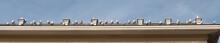 Panoramica Di Un Tetto Con Gabbiani A Sestri Levante