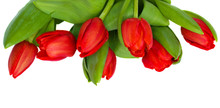 Red Tulips Isolated On White, Border