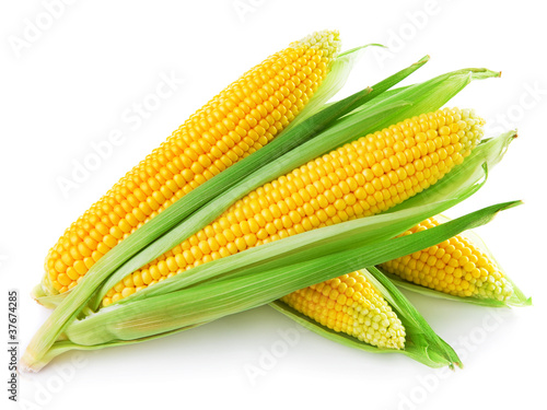 Obraz An ear of corn isolated on a white background - fototapety do salonu