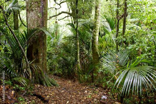 Naklejki dżungla  paprocie-i-drzewa-w-dzungli