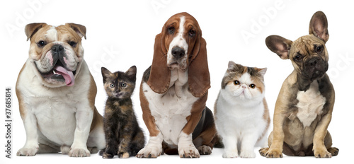 Plakaty zwierzęta   group-of-cats-and-dogs-in-front-of-white-background