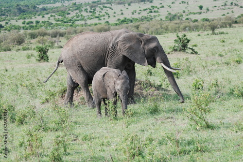 Foto auf Leinwand Elefant Mother and Daughter elephants
