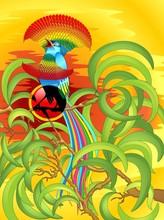 Uccello Del Paradiso Fantasia ...