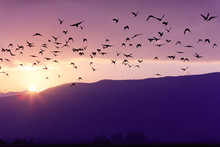 Flock Of Birds Flying At The Sunset Above Mountian At The Sunset