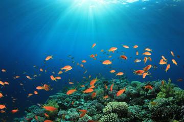 Fototapeta na wymiar Coral Reef Scene with Tropical Fish