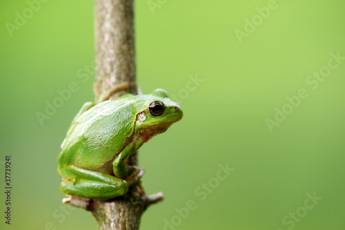 Foto op Plexiglas Kikker Frosch laubfrosch grün schön